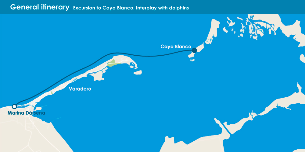 Cayo Blanco - Interplay with dolphins