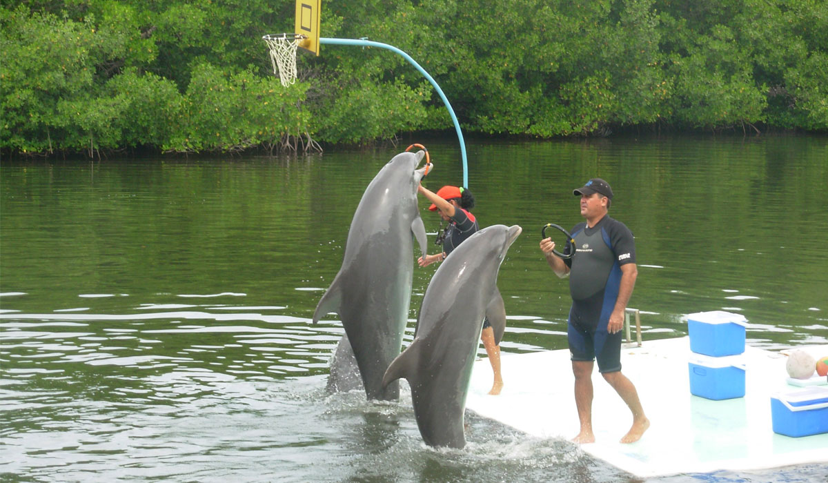 Show and bath with dolphins