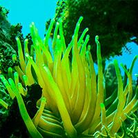 Diving from Cienfuegos, Rancho Luna Beach