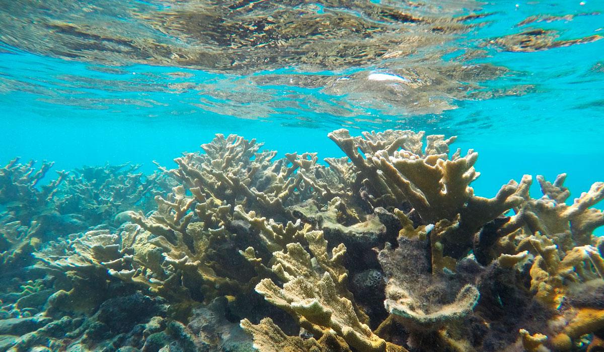 Diving from Santiago de Cuba, Carisol-Los Corales