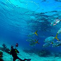 Buceo. Inmersiones desde Trinidad